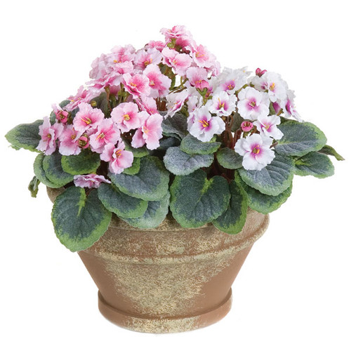 8  Inch x 9 Inch Potted Violet Flower Plant - Pink or Purple
