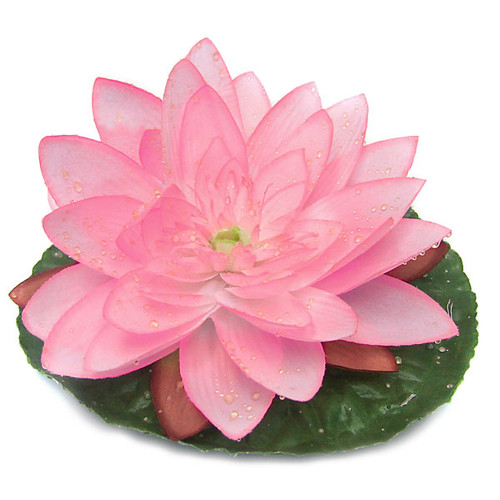 7 Inch Wide Floating Water Lily with Raindrops - Cream/White or Pink