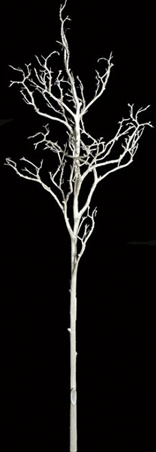 6 Foot White Coral Branch