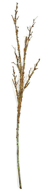 56 Inch Twig Branch with Moss
