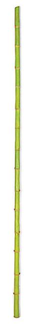 72 Inch Bamboo Pole