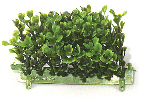 5 Inch Large Boxwood Edge
