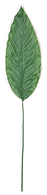 48 Inch Spathiphyllum Leaf Stem