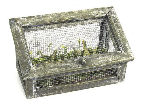 12 Inch Fern w/ Greenhouse