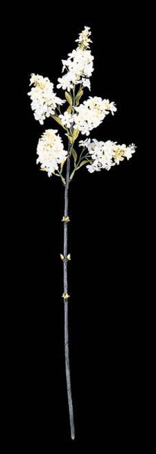 28 Inch Wild Lilac- Cream/White (SOLD BY THE DOZEN)
