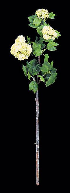 27 Inch Snowball Flower Branch