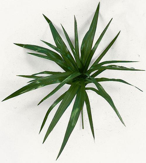 17 Inch Yucca Marginata