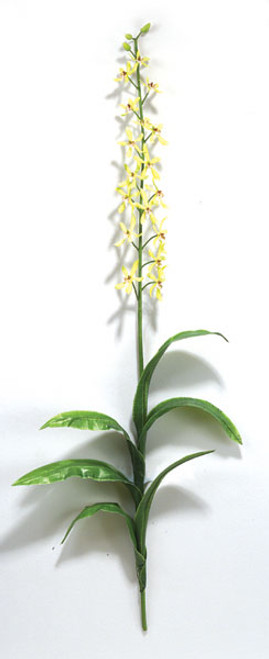 41 Inch Green Orchid Stem (SOLD BY THE DOZEN)