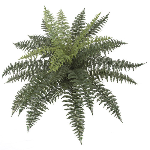 33 x 24 Inch Outdoor Ruffle Fern