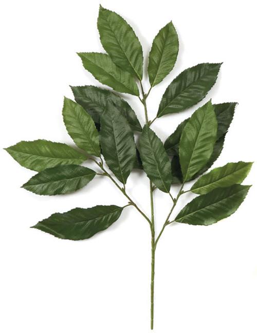 """PR-8442029"""" Chestnut Branch"""