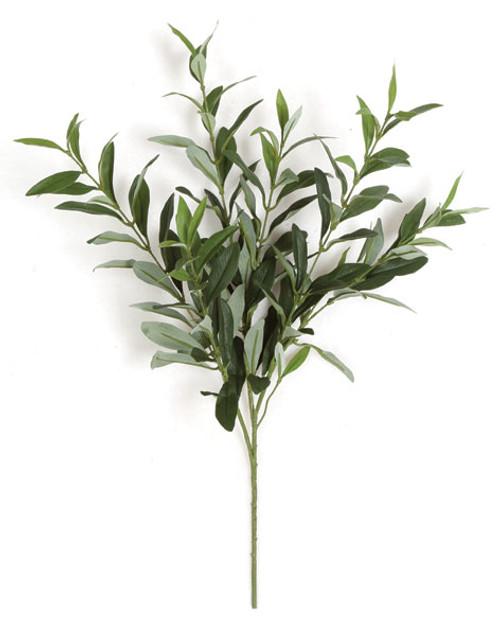"PR-220123"" Olive Branch"