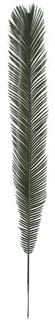 48 Inch Cycas Palm Branch (SOLD BY THE DOZEN)