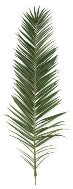 75 Inch IFR Phoenix Palm Frond - Light or Dark Green