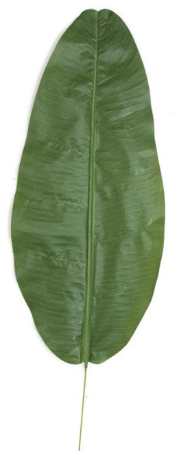 39 Inch Banana Palm Leaf (Sold by the Dozen)
