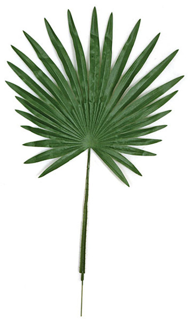 32 Inch Fan Palm Branch (sold by the dozen)