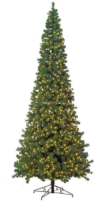 10 Foot Virginia Pine Slim Trees