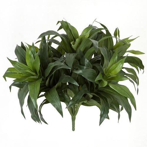 21 Inch Dracaena Fragrans Plant