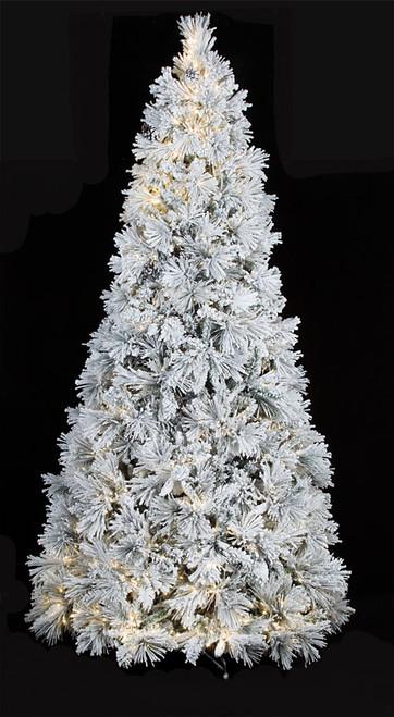 7.5 Foot and 9 Foot Slim Bavarian Pine Tree