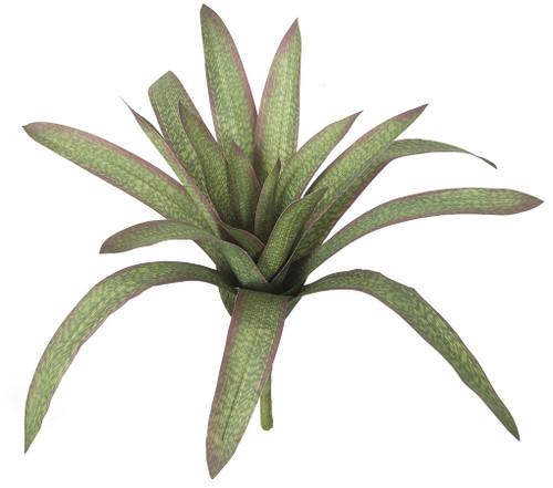 20 Inch Bromeliad Plant