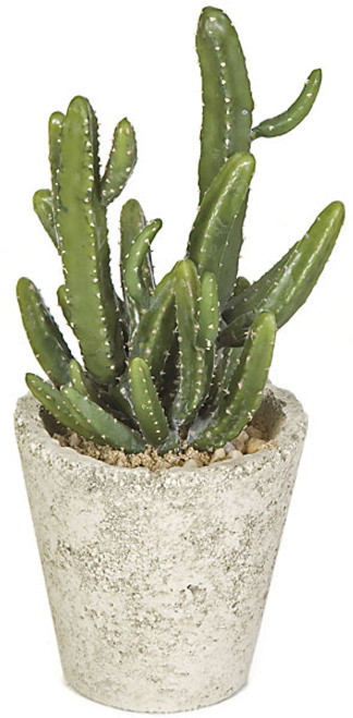 12.5 Inch Potted Mini Cactus