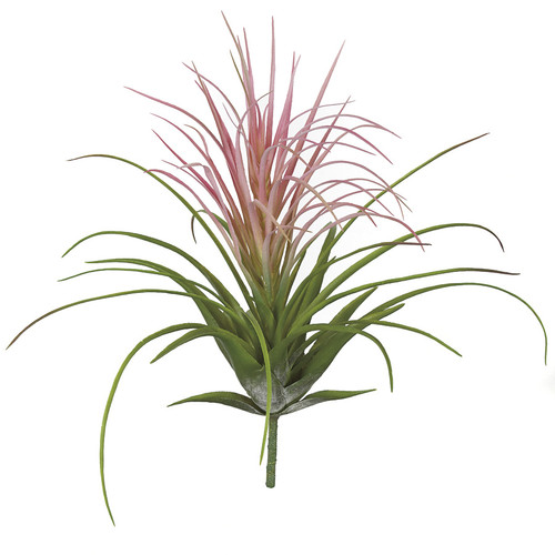18.5 Inch Tillandsia Air Plant