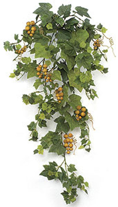 36 Inch Grape Ivy Bush Vine with Grapes