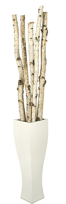 6 to 8 Feet Natural Birch Poles, 2 to 3 Inch Width