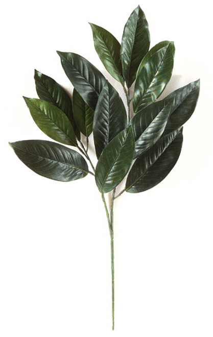 28 Inch Magnolia Branch - Green (Sold by the Dozen)