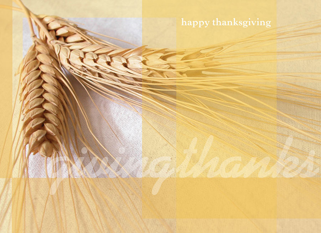 TH7003 - Autumn Wheat