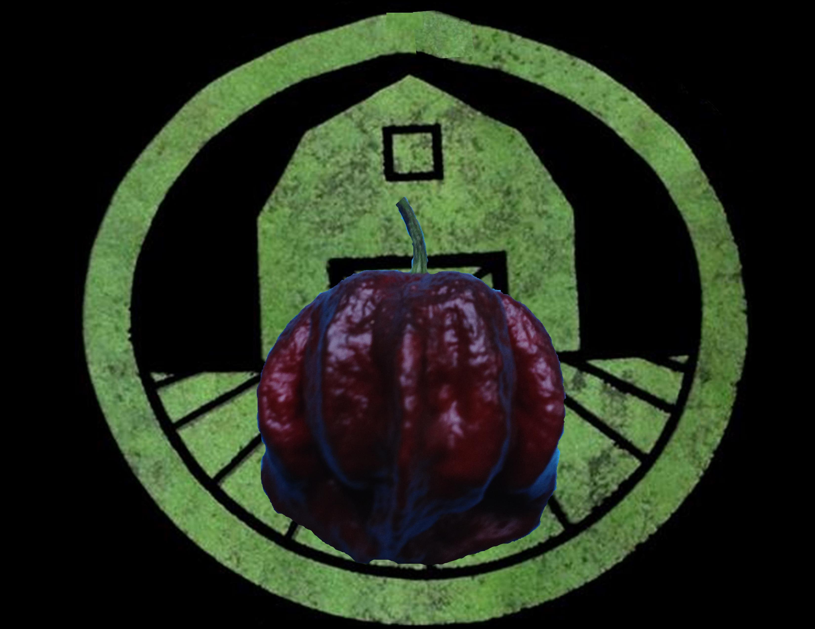 Chocolate 7 Pot Pepper | Tyler Farms