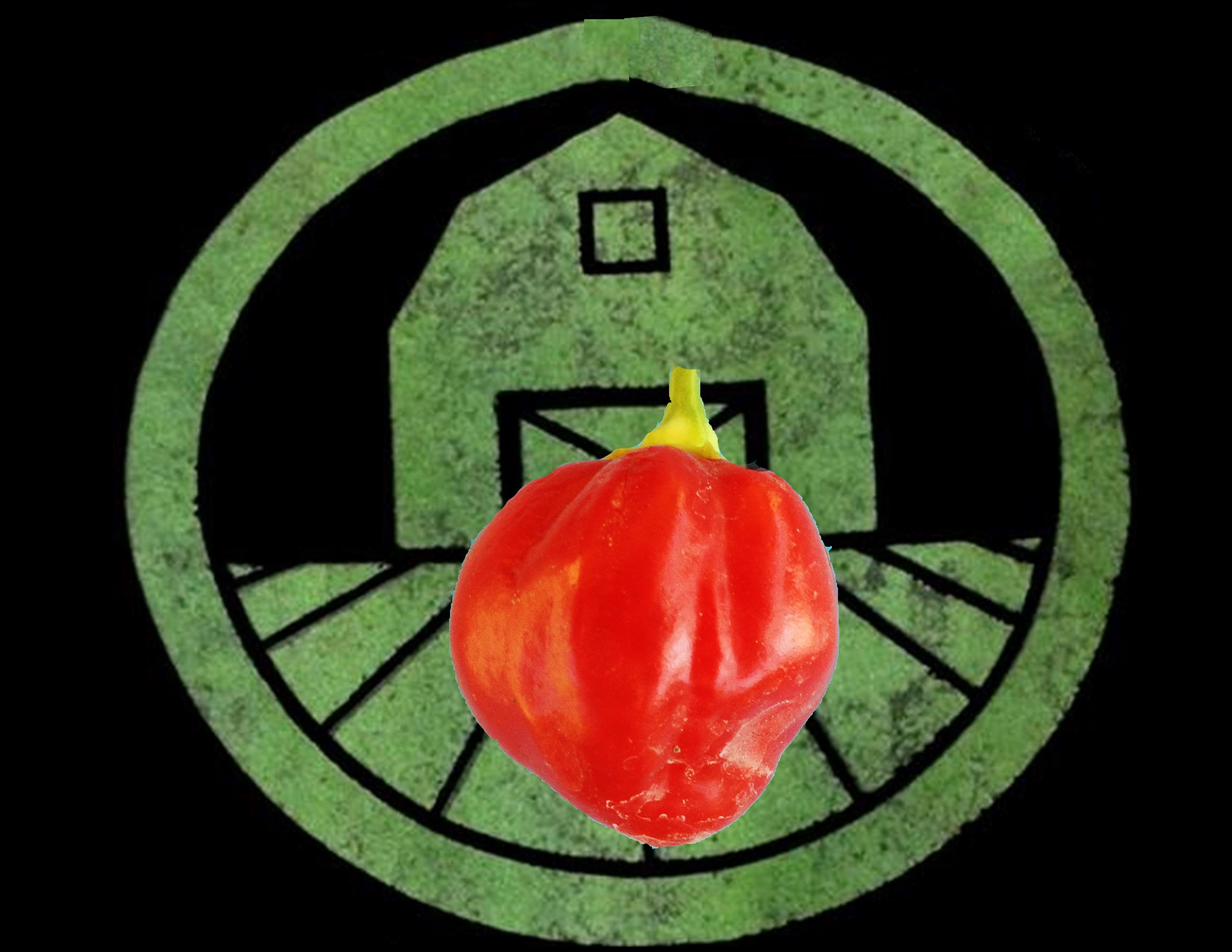 Caribbean Red Habanero Pepper | Tyler Farms