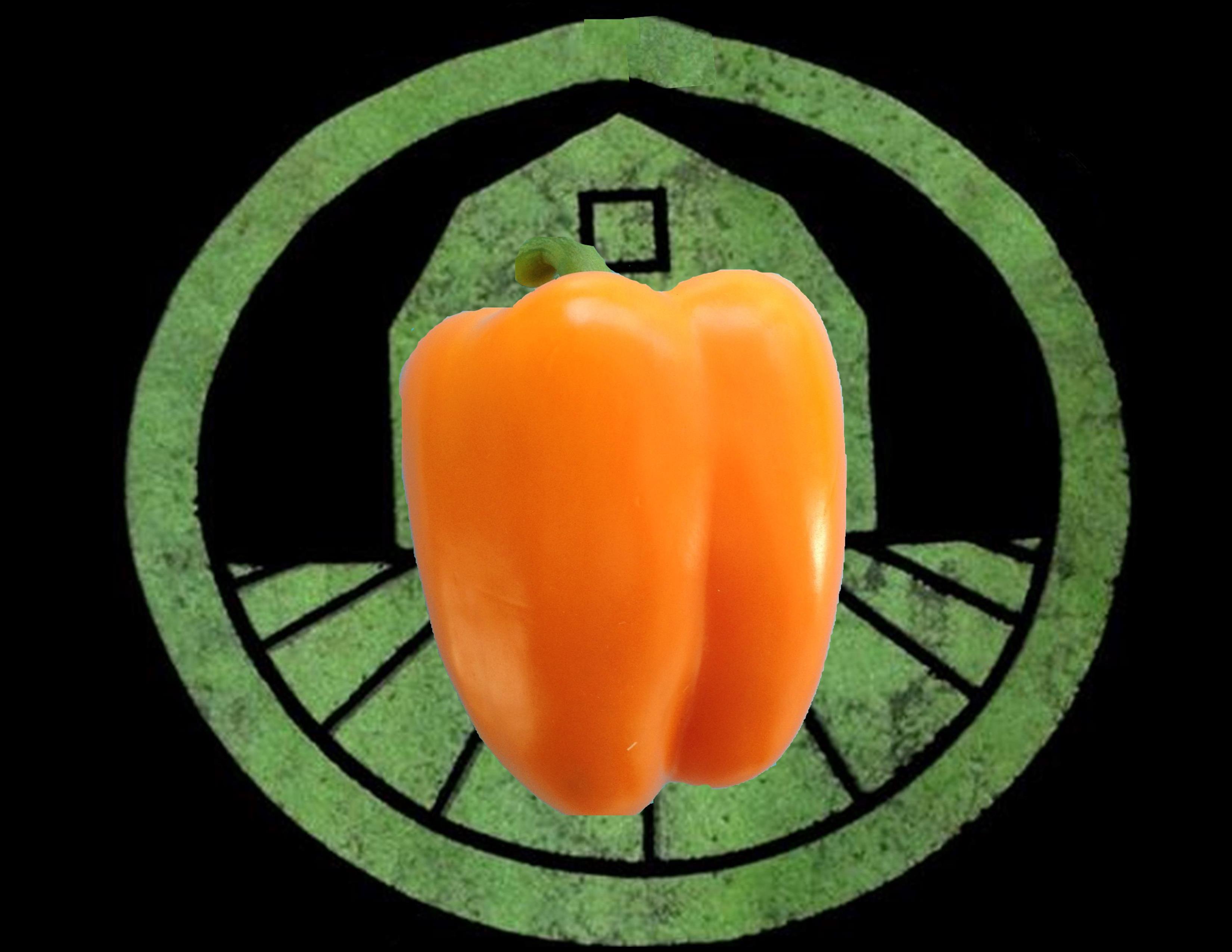 Orange Bell Pepper | Tyler Farms