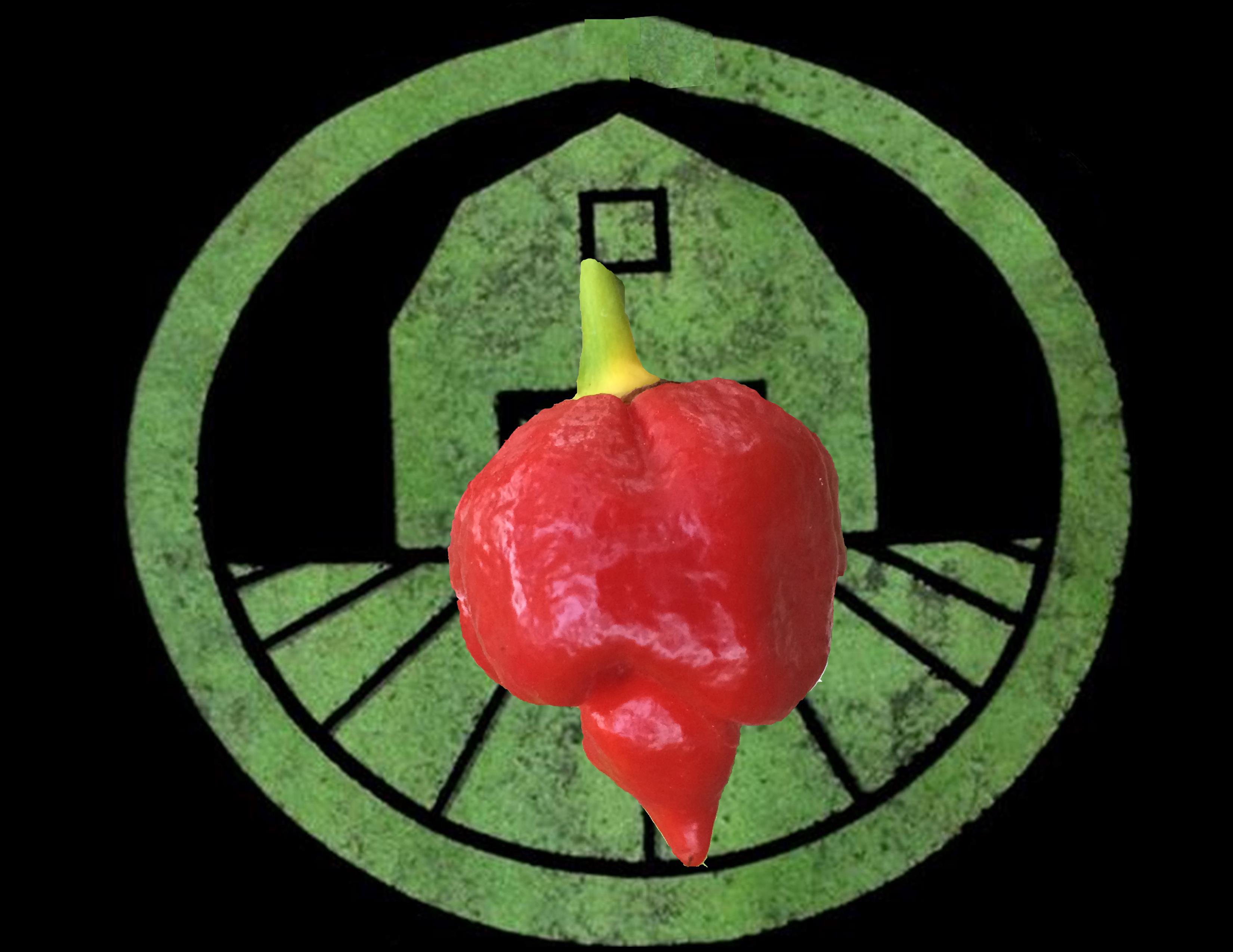 Trinidad Scorpion Pepper | Tyler Farms