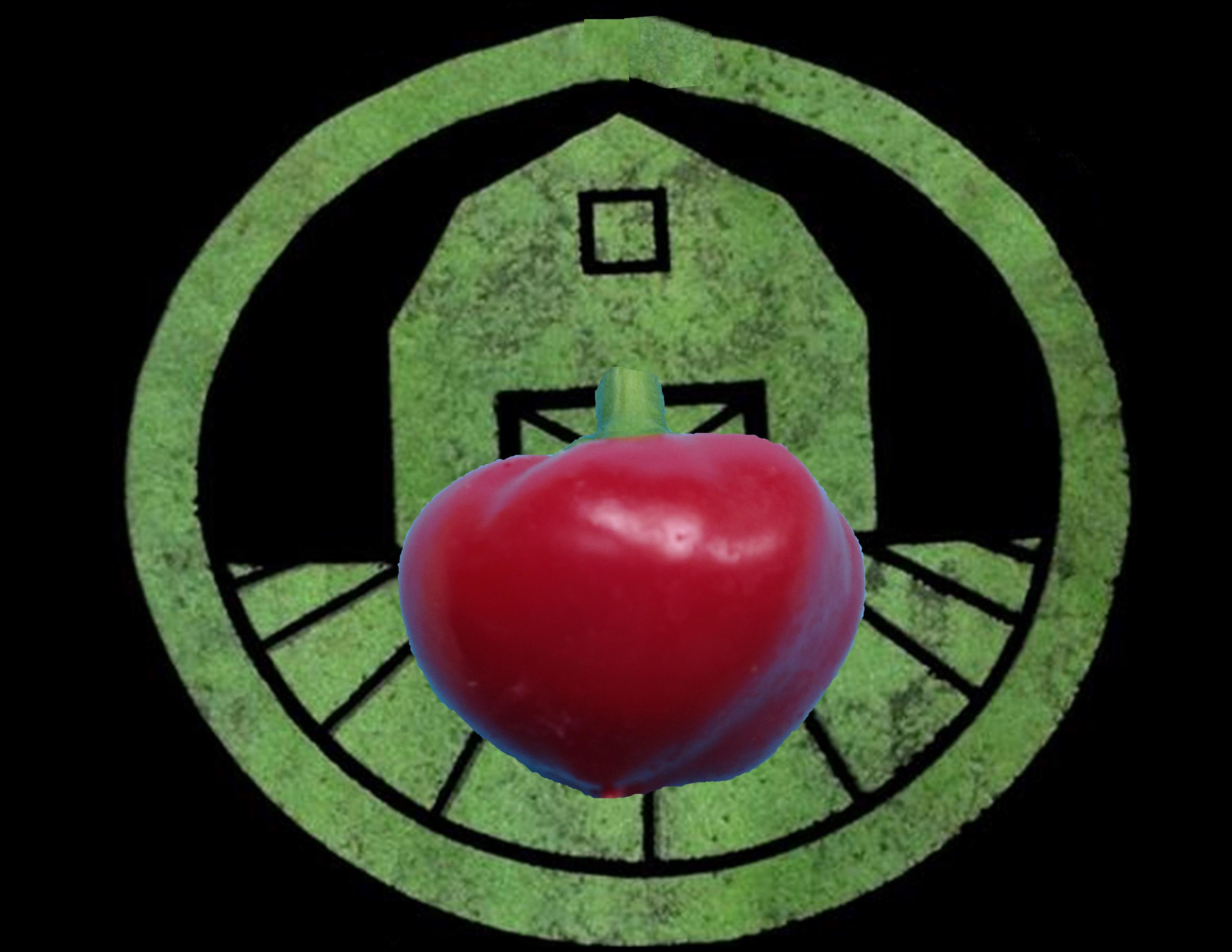 Red Cherry Bomb Pepper | Tyler Farms