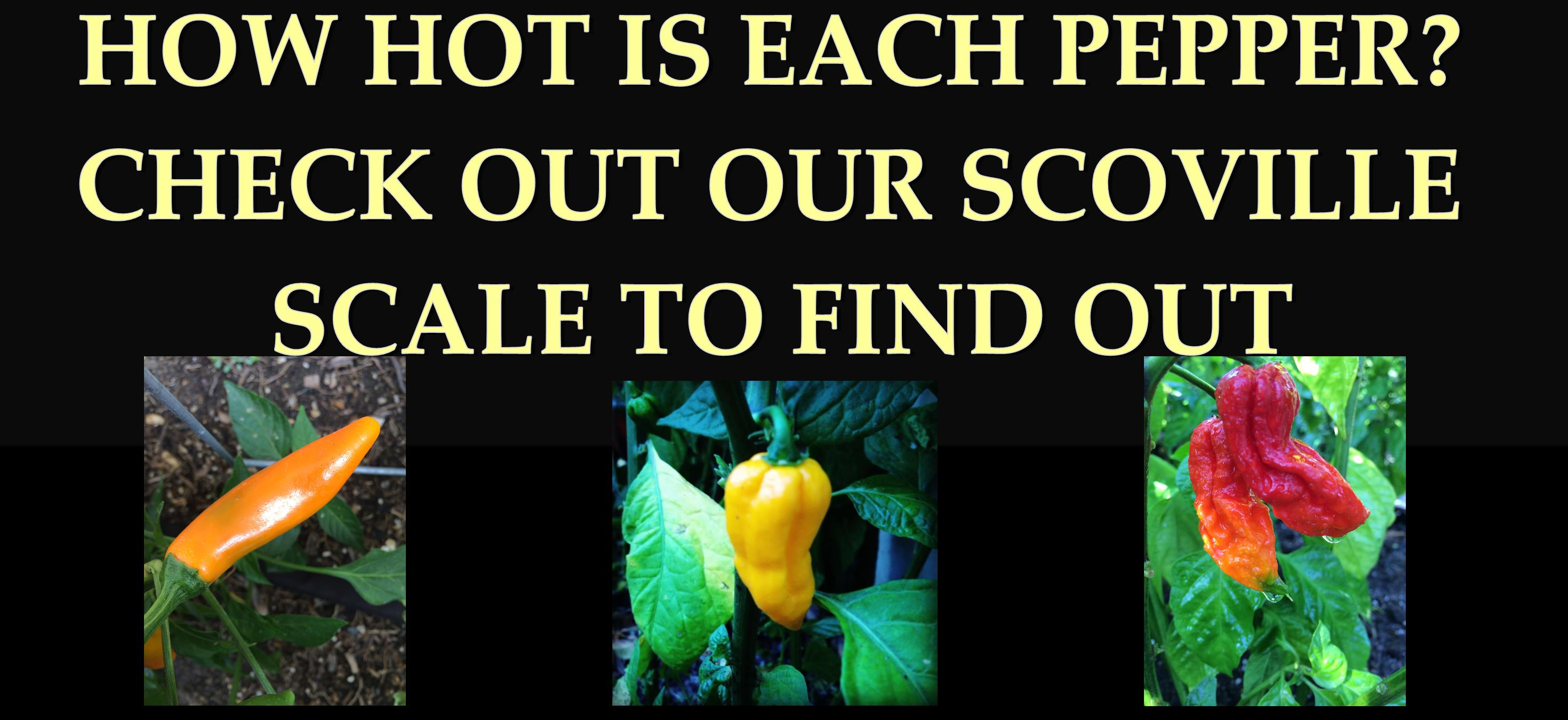 scoville-scale-tyler-farms-peppers-caro.jpg