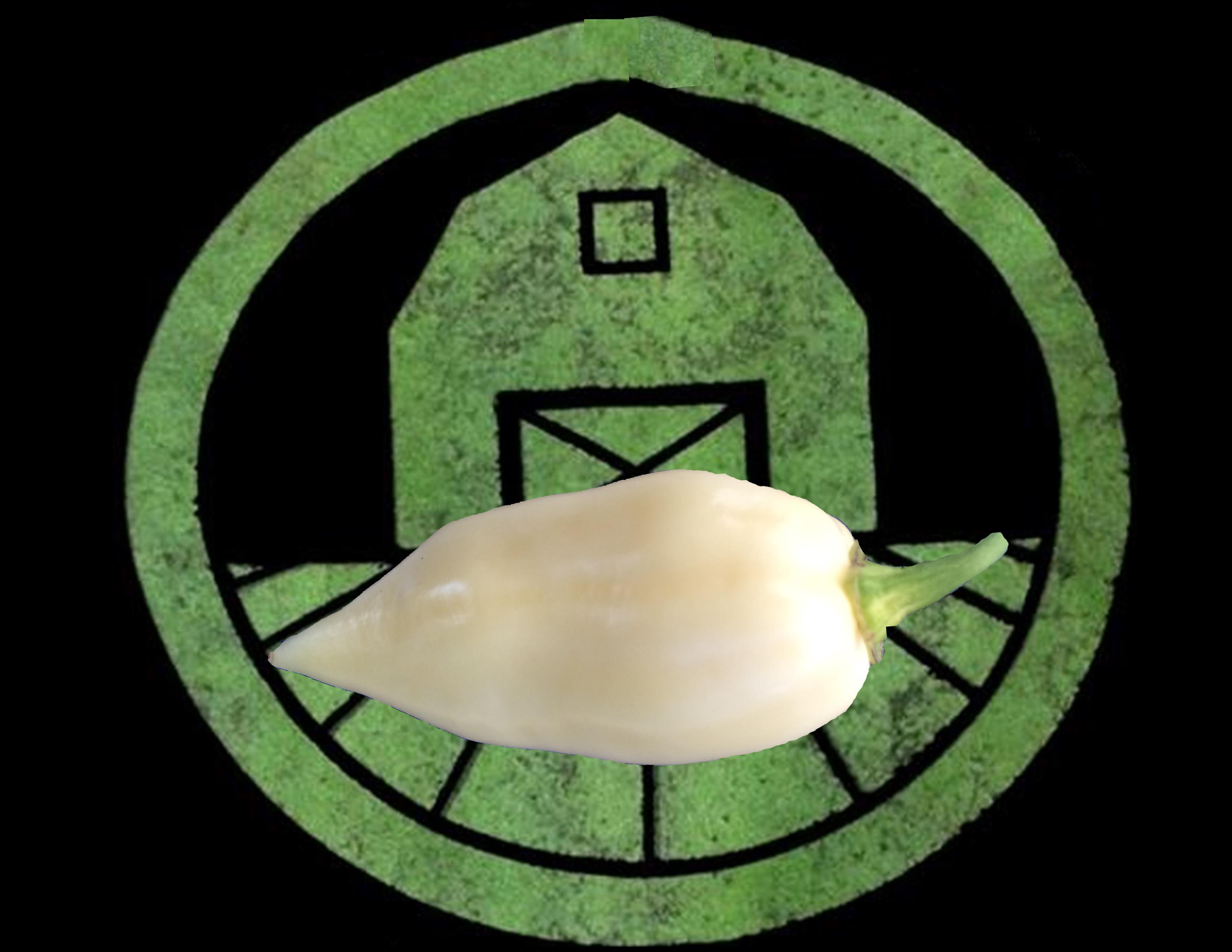 White Ghost Pepper (Bhut Jolokia) | Tyler Farms