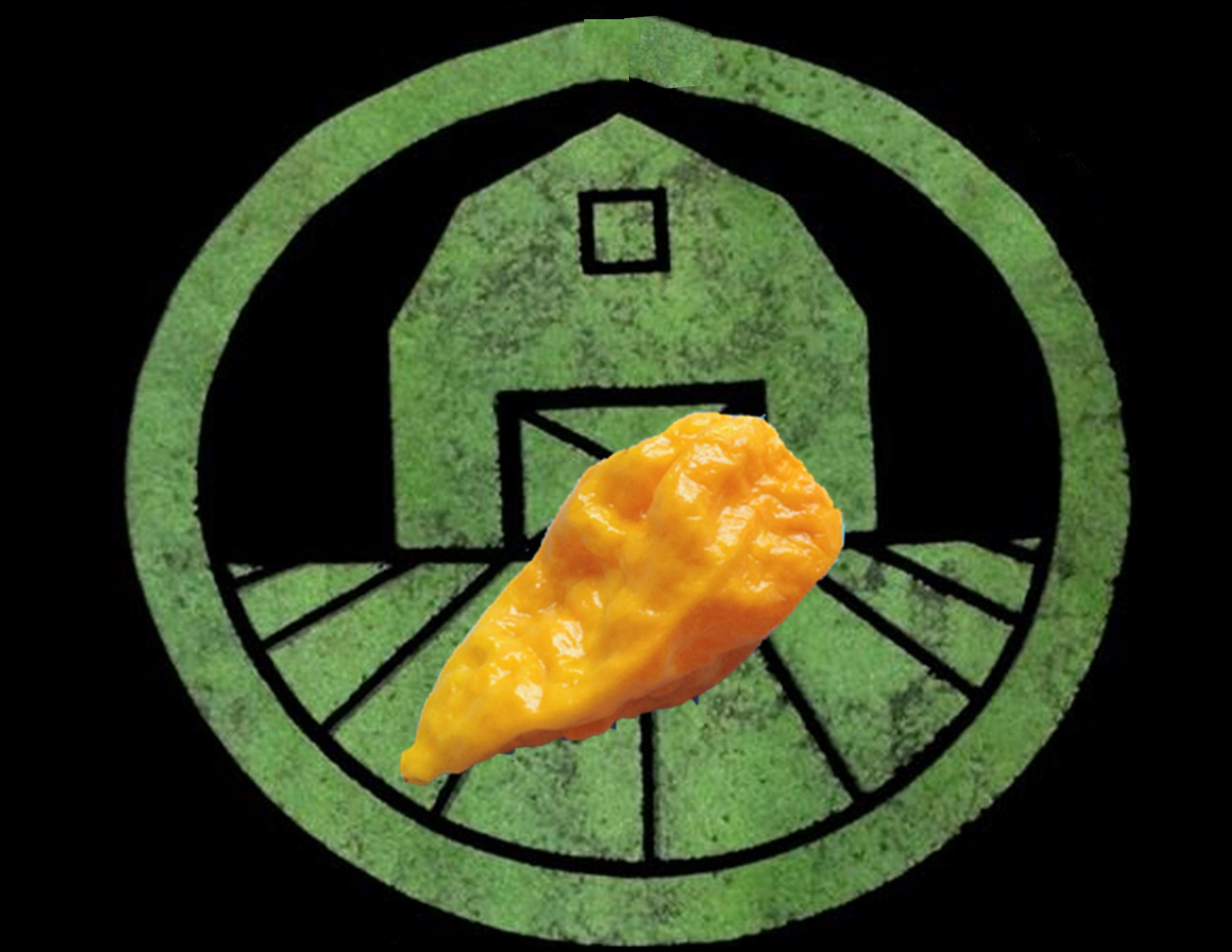 Yellow Ghost (Bhut Jolokia) Pepper | Tyler Farms