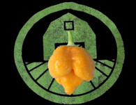 Trinidad Moruga Scorpion Pepper Seeds - Yellow
