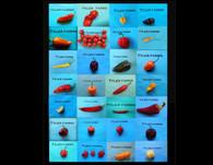 Mystery Pepper Seeds (Random Assortment Pack)