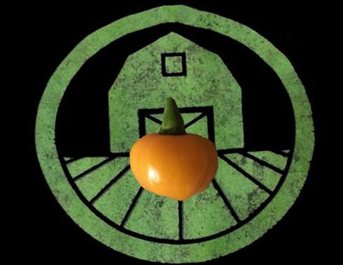 Fireball Habanero Pepper | Tyler Farms
