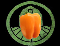 Orange Bell Pepper Seeds