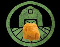 Yellow 7 Pot Lava Pepper | Tyler Farms