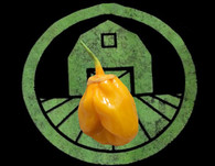 Yellow 7 Pot Pepper   Tyler Farms