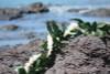 "Silk Leis Pikake / Maile Wrap 60"", Off White/Green - Silk Hawaiian Leis"