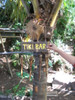 """TIKI BAR"" WIND CHIME - 40"" BAMBOO - TROPICAL RELAXATION"