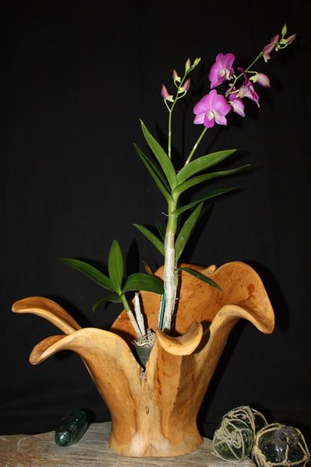 "Wooden Vase Rustic Bowl Sculpture 16"" X 14"" X 14"" | #hwa167"