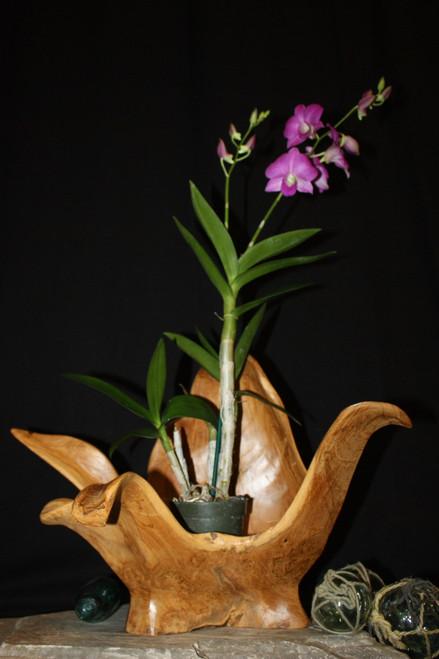 "Wooden Vase Rustic Bowl Sculpture 21"" X 17"" X 14"" | #hwa168"