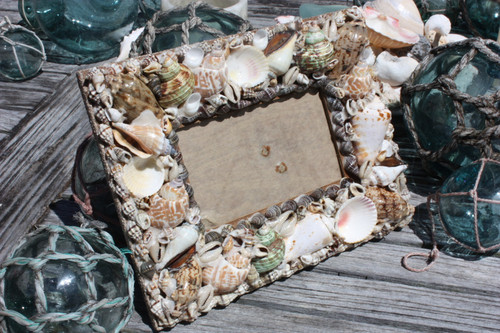 "Seashell Photo Frame Brown Edge Designer 2"" 3/4 X 5"" 
