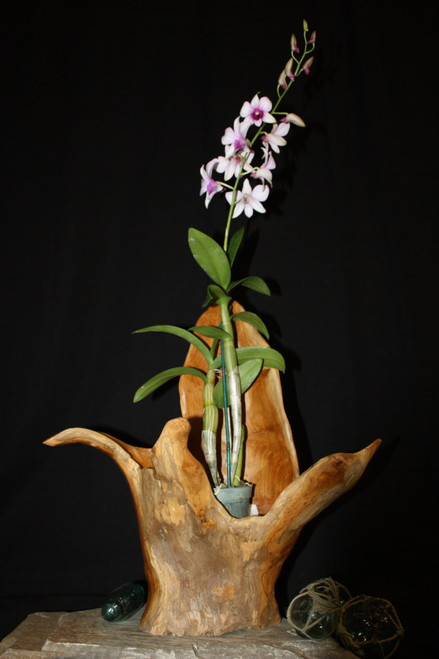 "Wooden Vase Rustic Bowl Sculpture 19"" X 10"" X 21"" 