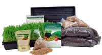 Handy Pantry Wheatgrass Growing Kit